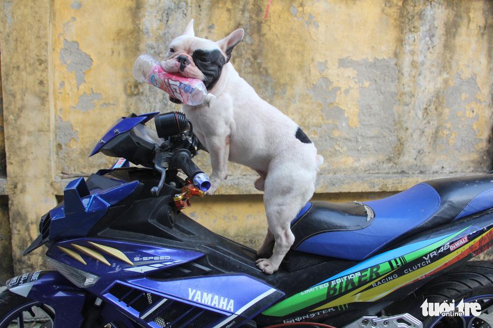 Vựa ve chai của chú chó đáng yêu tại Hà Nội - Ảnh 6.