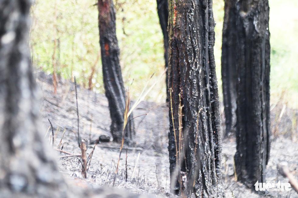 Dân Hà Tĩnh xót xa nhìn rừng thông bị 'giặc lửa' thiêu rụi - Ảnh 9.