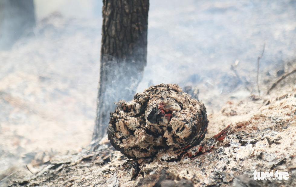 Dân Hà Tĩnh xót xa nhìn rừng thông bị 'giặc lửa' thiêu rụi - Ảnh 4.