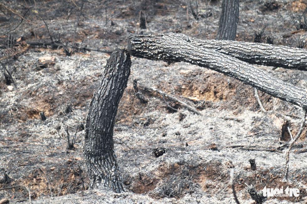 Dân Hà Tĩnh xót xa nhìn rừng thông bị 'giặc lửa' thiêu rụi - Ảnh 3.