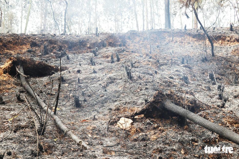 Dân Hà Tĩnh xót xa nhìn rừng thông bị 'giặc lửa' thiêu rụi - Ảnh 2.