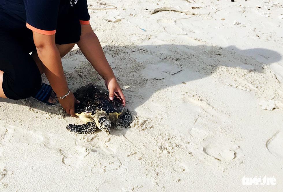 Người trẻ tình nguyện ra chăm chút từng góc đảo Hòn Cau - Ảnh 10.