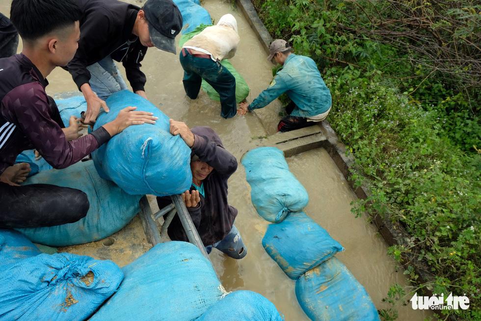 Cả làng đắp đê suốt 3 ngày đêm, cứu hơn 1.000ha lúa sắp thu hoạch - Ảnh 9.