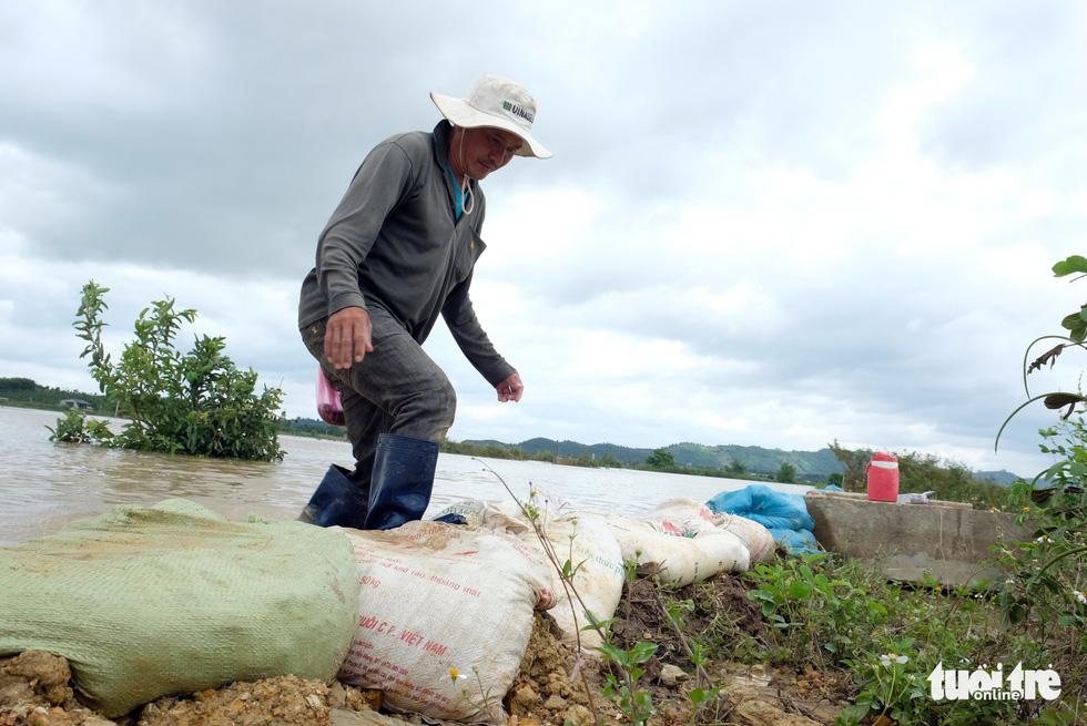 Cả làng đắp đê suốt 3 ngày đêm, cứu hơn 1.000ha lúa sắp thu hoạch - Ảnh 10.