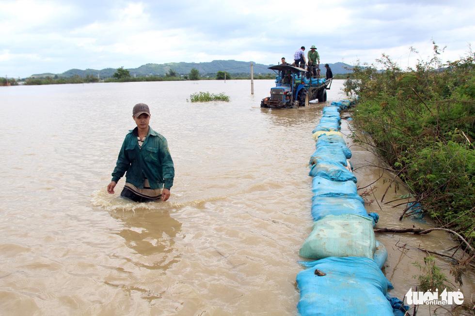 Cả làng đắp đê suốt 3 ngày đêm, cứu hơn 1.000ha lúa sắp thu hoạch - Ảnh 12.