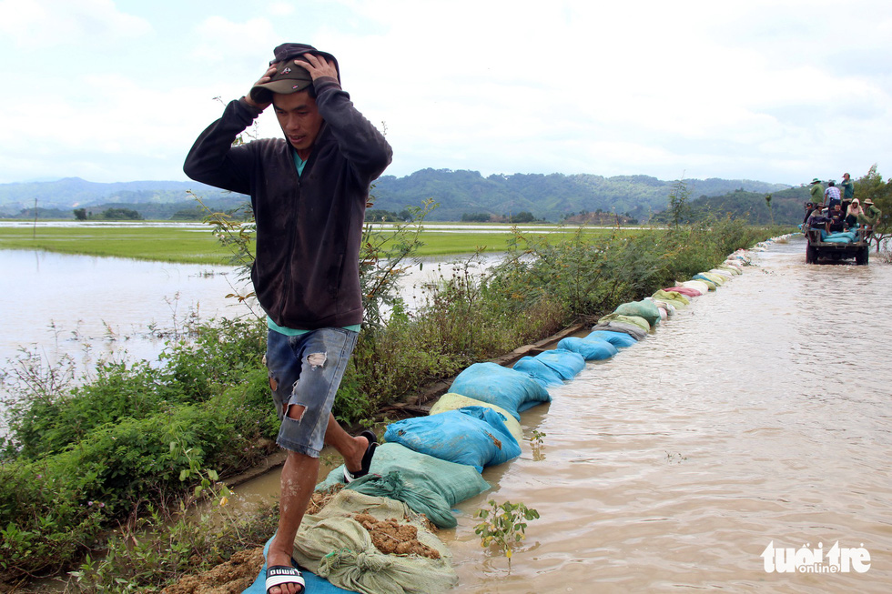 Cả làng đắp đê suốt 3 ngày đêm, cứu hơn 1.000ha lúa sắp thu hoạch - Ảnh 17.