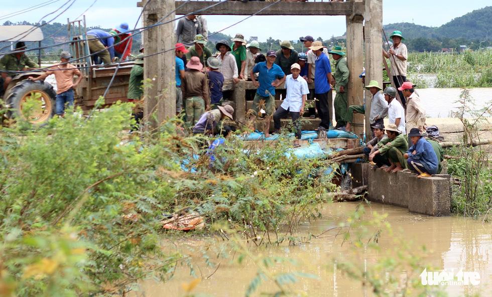 Cả làng đắp đê suốt 3 ngày đêm, cứu hơn 1.000ha lúa sắp thu hoạch - Ảnh 13.