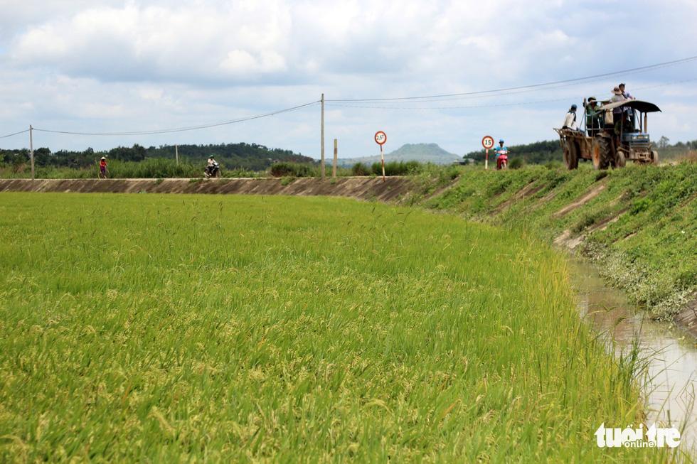 Cả làng đắp đê suốt 3 ngày đêm, cứu hơn 1.000ha lúa sắp thu hoạch - Ảnh 19.