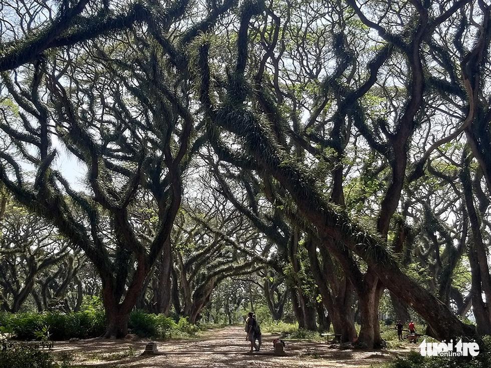 Khu rừng kỳ ảo ở miền Bình minh Java - Ảnh 4.