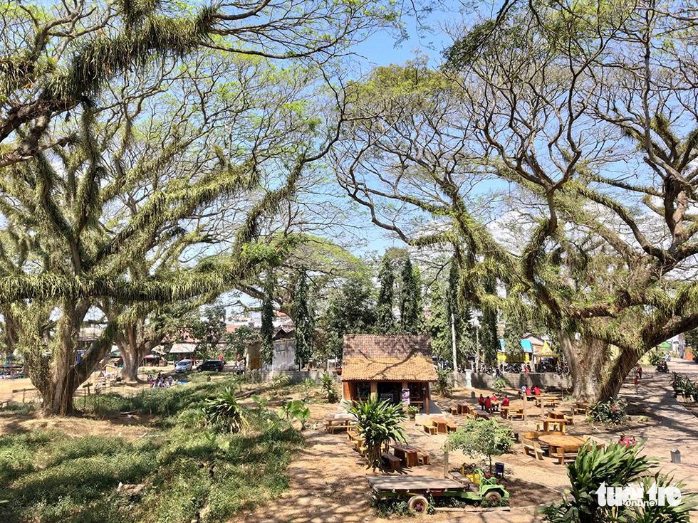 Khu rừng kỳ ảo ở miền Bình minh Java - Ảnh 5.