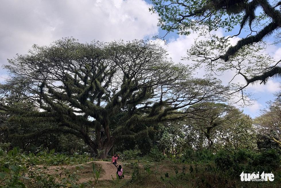 Khu rừng kỳ ảo ở miền Bình minh Java - Ảnh 7.