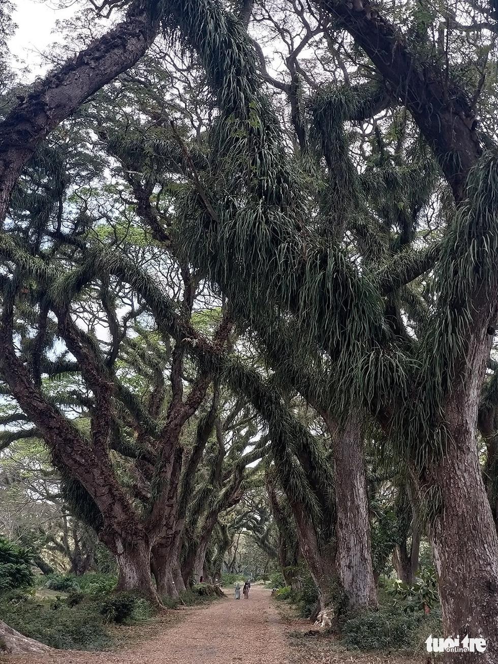 Khu rừng kỳ ảo ở miền Bình minh Java - Ảnh 8.