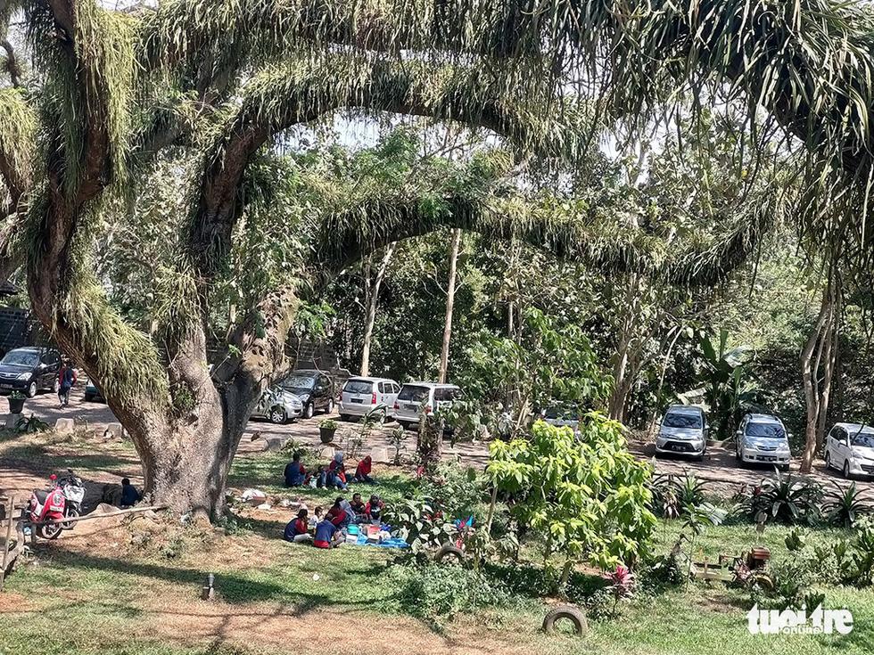 Khu rừng kỳ ảo ở miền Bình minh Java - Ảnh 6.
