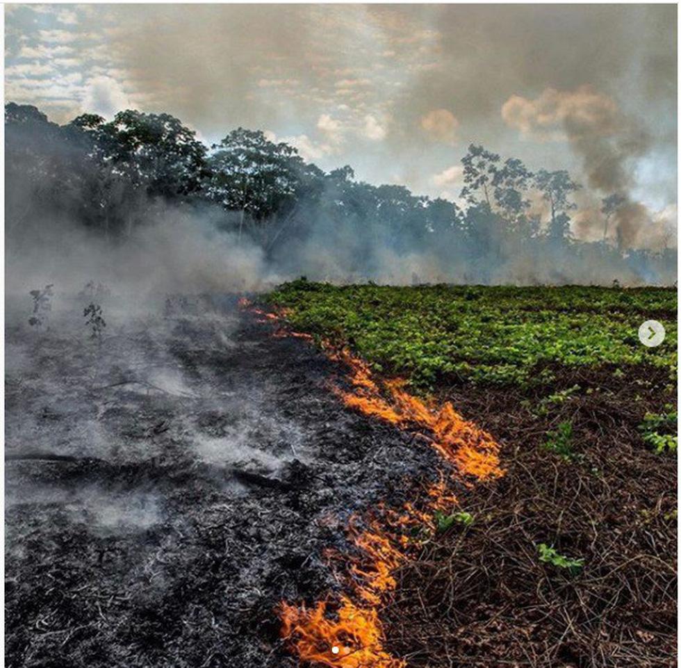 Cháy rừng Amazon: Nguyên thủ, diễn viên, ca sĩ cũng 'share' nhầm ảnh - Ảnh 4.