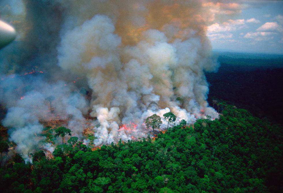 Cháy rừng Amazon: Nguyên thủ, diễn viên, ca sĩ cũng 'share' nhầm ảnh - Ảnh 1.