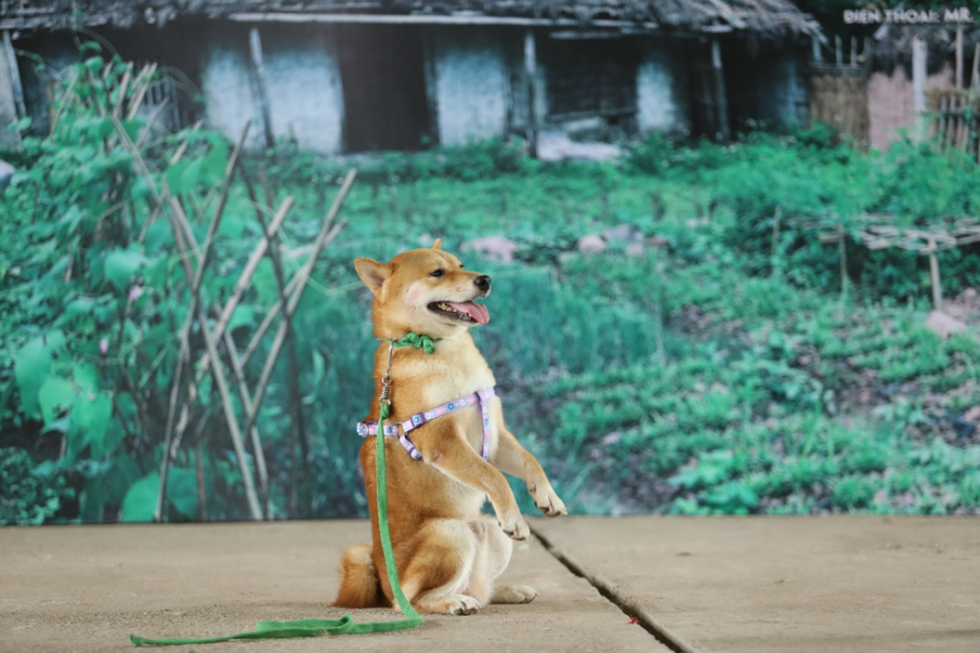 Cậu Vàng của Nam Cao: Phim Việt đầu tiên vai chính là một chú chó - Ảnh 1.