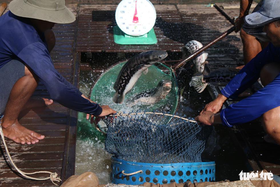 Con đường đưa nông thủy sản sang Thái Lan - Ảnh 4.