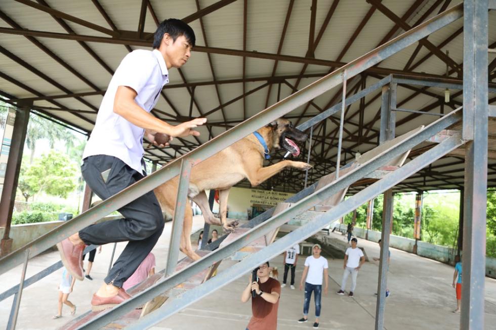 Các chú chó đến casting Cậu Vàng đã trải qua nhiều thử thách