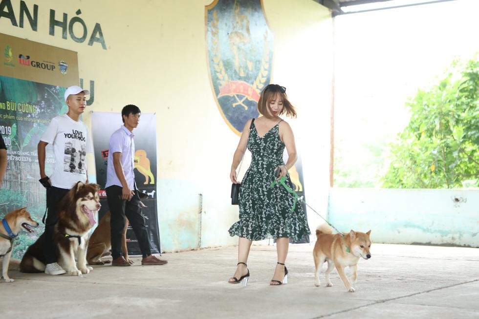 Cậu Vàng của Lão Hạc phải là chó ta, Shiba Inu là chó Nhật Bản! - Ảnh 1.