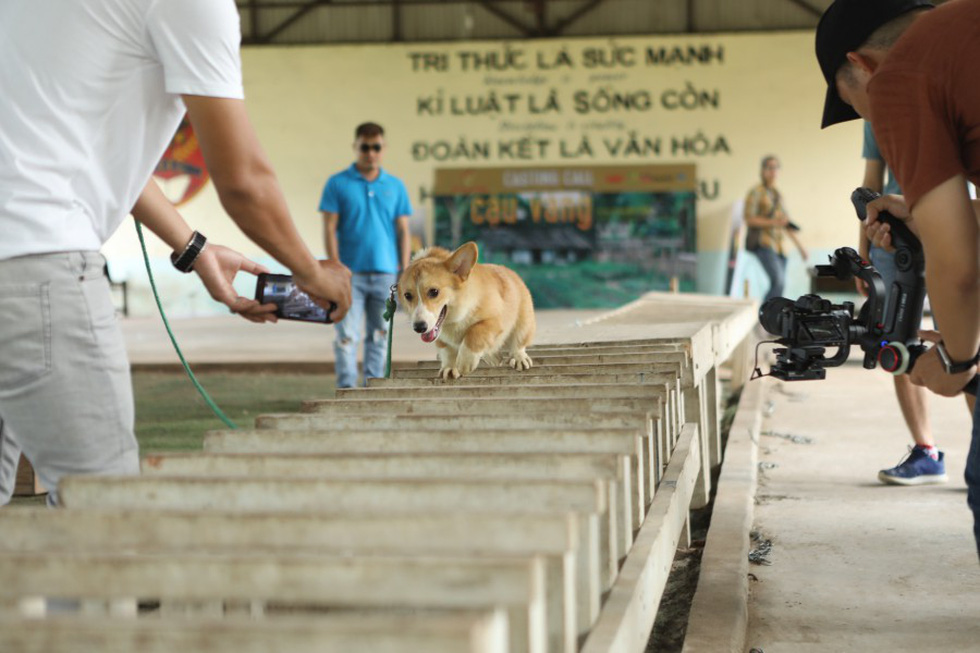 Cậu Vàng của Nam Cao: Phim Việt đầu tiên vai chính là một chú chó - Ảnh 8.