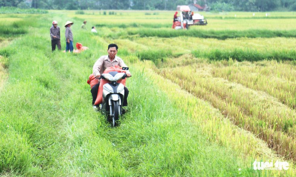 Nông dân Nghệ An hối hả thu hoạch lúa 'chạy' bão số 4 - Ảnh 4.
