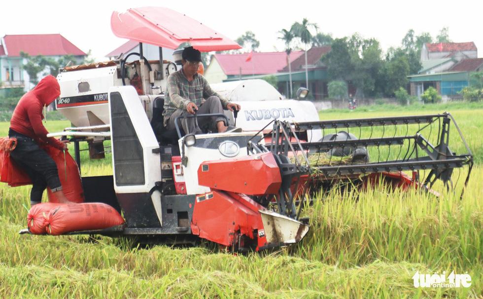 Nông dân Nghệ An hối hả thu hoạch lúa 'chạy' bão số 4 - Ảnh 3.