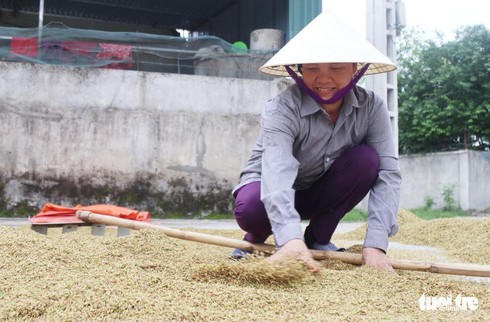Nông dân Nghệ An hối hả thu hoạch lúa 'chạy' bão số 4 - Ảnh 8.