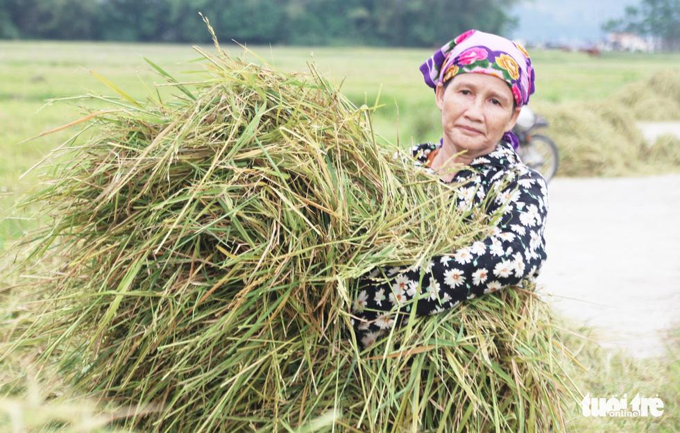 Nông dân Nghệ An hối hả thu hoạch lúa 'chạy' bão số 4 - Ảnh 10.