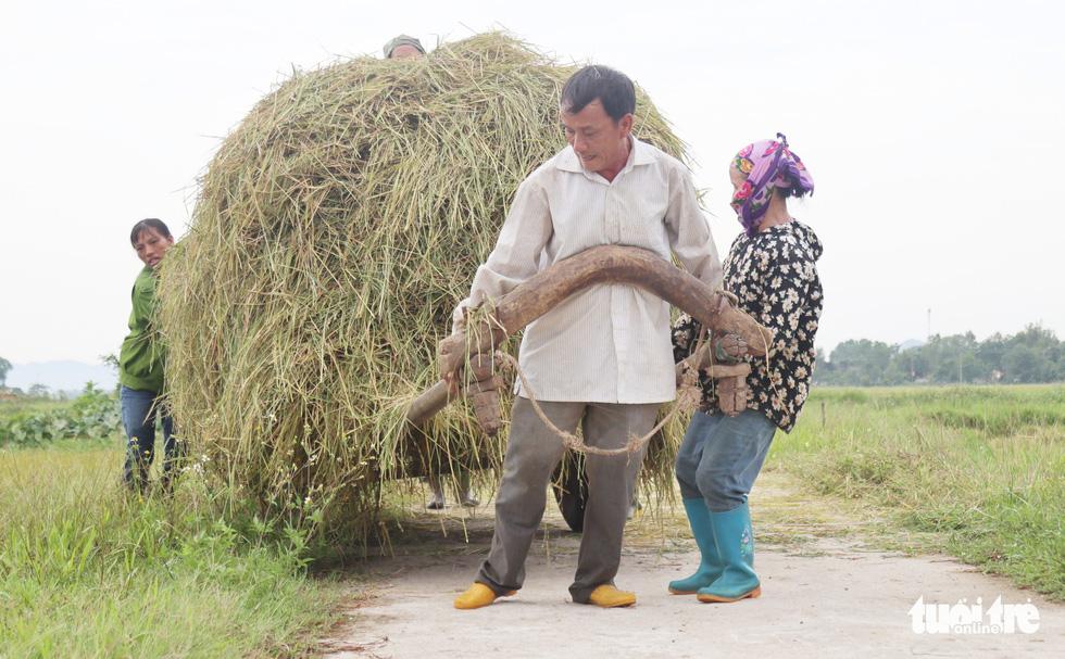 Nông dân Nghệ An hối hả thu hoạch lúa 'chạy' bão số 4 - Ảnh 11.
