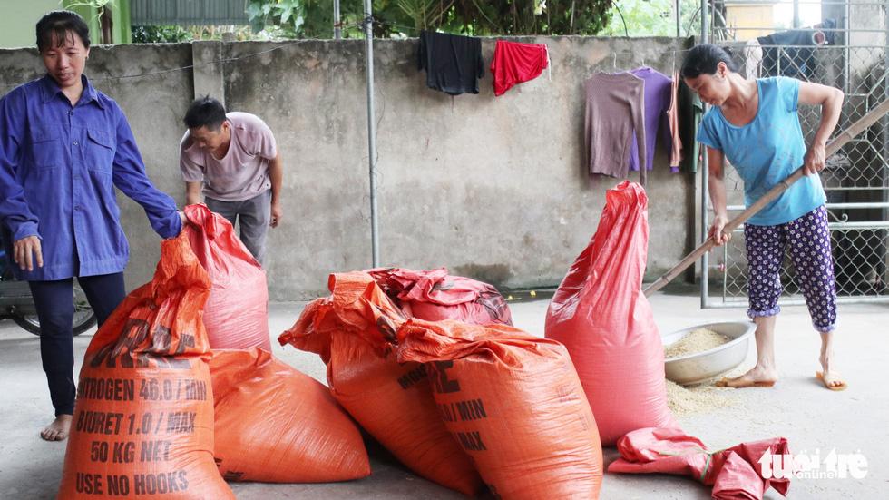 Nông dân Nghệ An hối hả thu hoạch lúa 'chạy' bão số 4 - Ảnh 12.