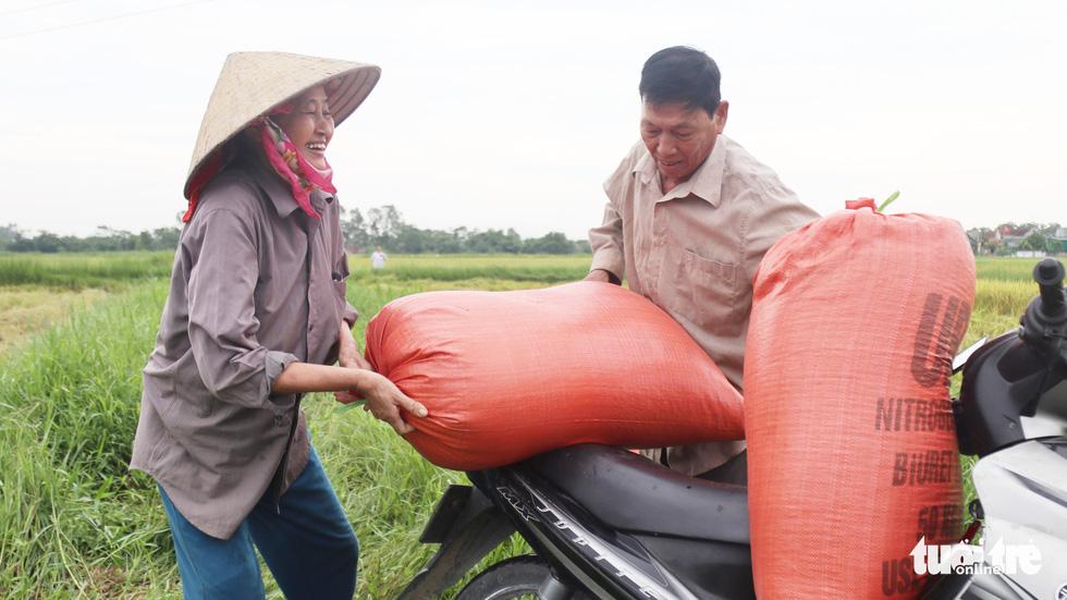 Nông dân Nghệ An hối hả thu hoạch lúa 'chạy' bão số 4 - Ảnh 6.