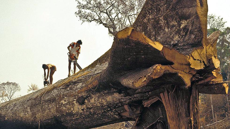 Cháy rừng Amazon: Chẳng lẽ chỉ vì miếng bít-tết? - Ảnh 2.