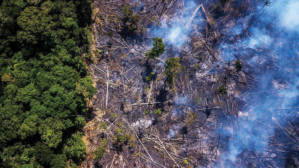 Cháy rừng Amazon: Chẳng lẽ chỉ vì miếng bít-tết? - Ảnh 1.