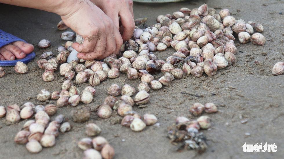 Cả trăm người dân, du khách tụ về bờ biển nhặt sò, ngao sau bão số 4 - Ảnh 11.
