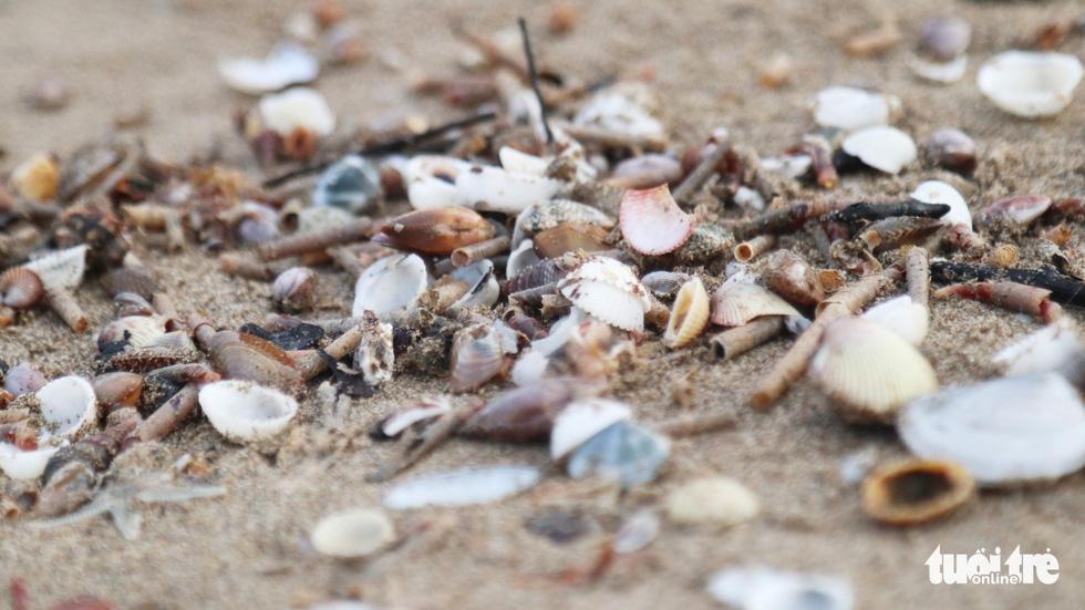 Cả trăm người dân, du khách tụ về bờ biển nhặt sò, ngao sau bão số 4 - Ảnh 12.