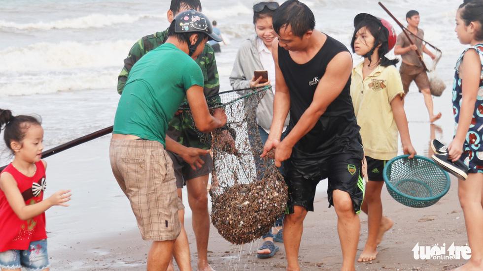 Cả trăm người dân, du khách tụ về bờ biển nhặt sò, ngao sau bão số 4 - Ảnh 8.