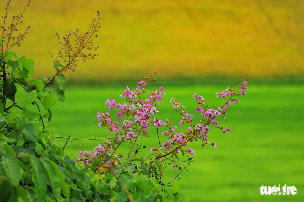 Bình dị mà rạng rỡ trên cánh đồng lúa Tà Pạ ở Tri Tôn - Ảnh 3.