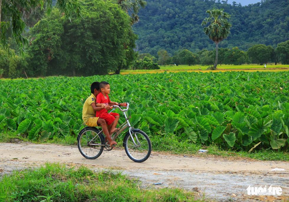 Bình dị mà rạng rỡ trên cánh đồng lúa Tà Pạ ở Tri Tôn - Ảnh 10.