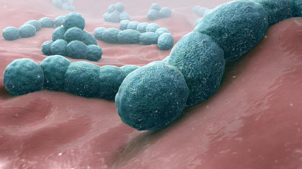 Vi khuẩn giết chết con người - Thiệt hại hơn một vụ cố sát - Ảnh 1.