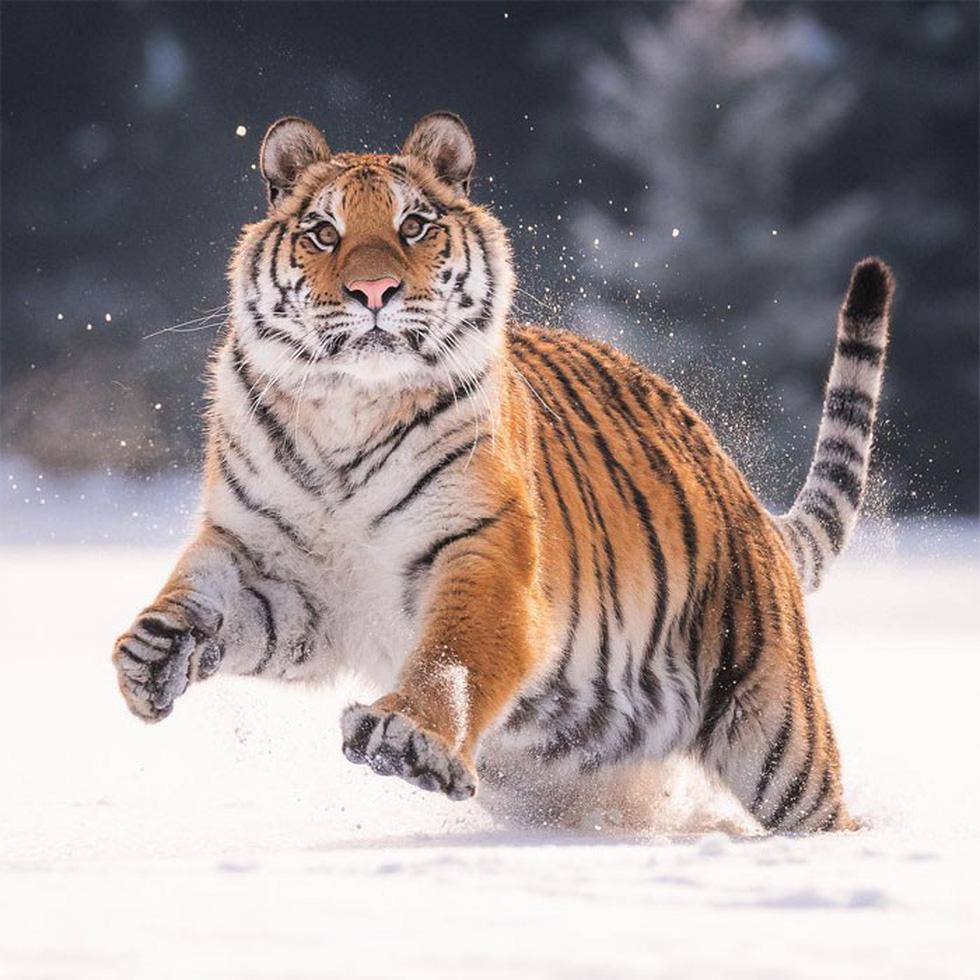 Khoảnh khắc siêu dễ thương của động vật khi không có ai xung quanh - Ảnh 13.