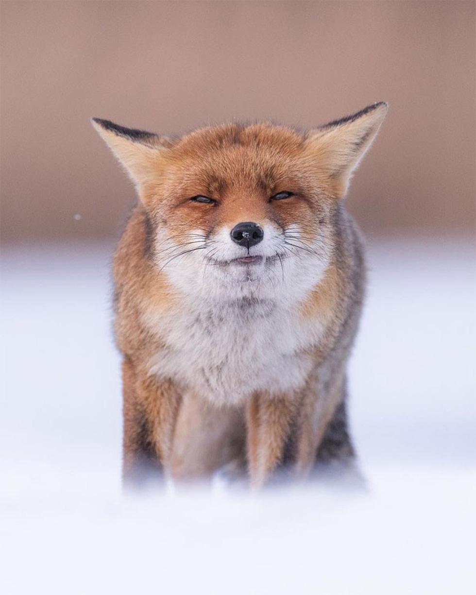 Khoảnh khắc siêu dễ thương của động vật khi không có ai xung quanh - Ảnh 4.