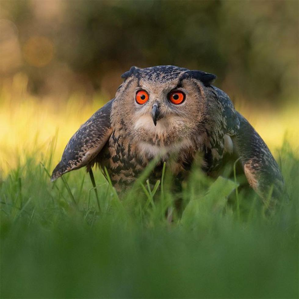 Khoảnh khắc siêu dễ thương của động vật khi không có ai xung quanh - Ảnh 15.