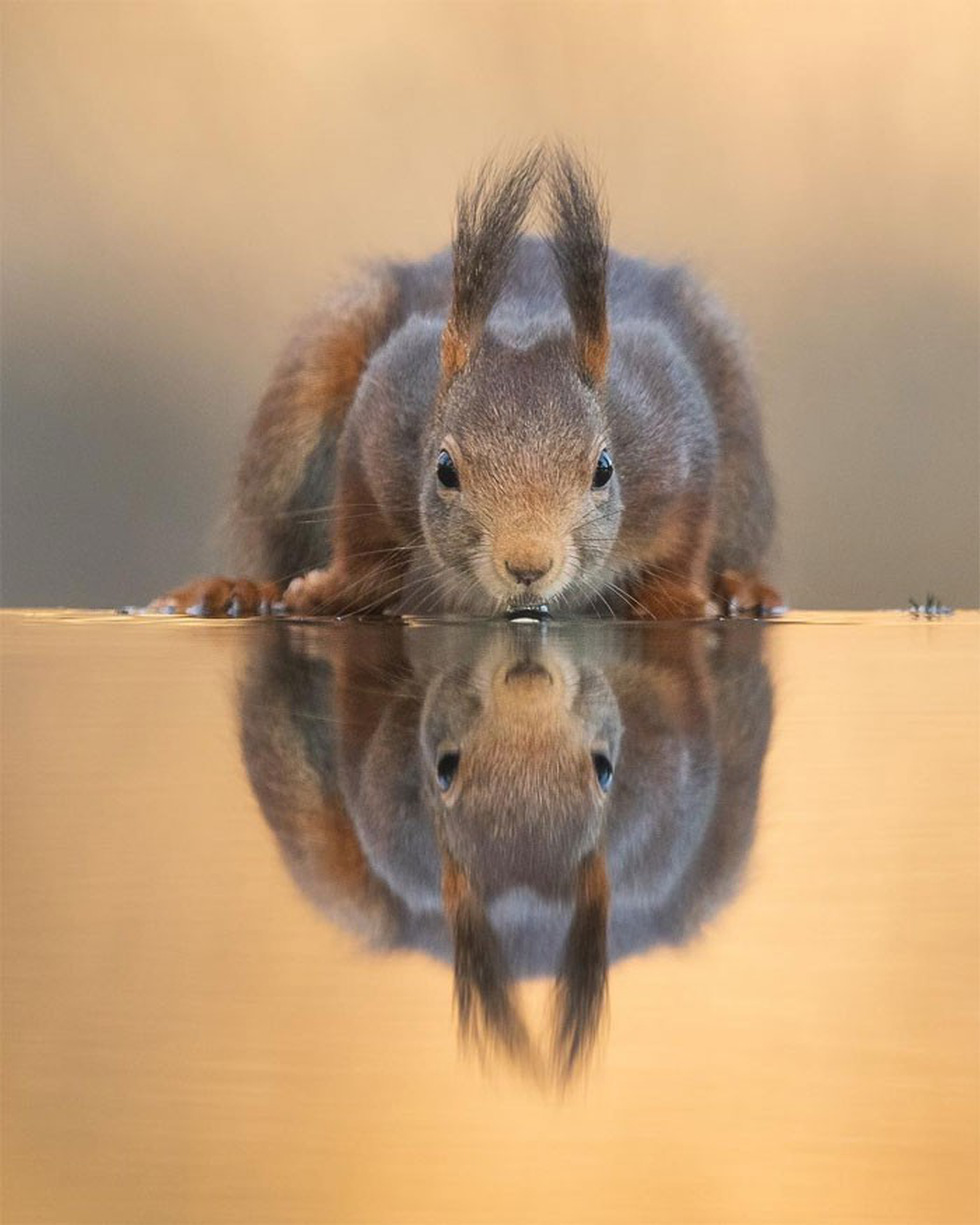 Khoảnh khắc siêu dễ thương của động vật khi không có ai xung quanh - Ảnh 9.