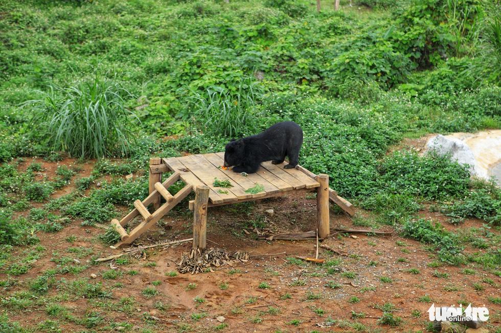 Hãy cứu những chú gấu gặm nỗi buồn trong cũi sắt - Ảnh 3.