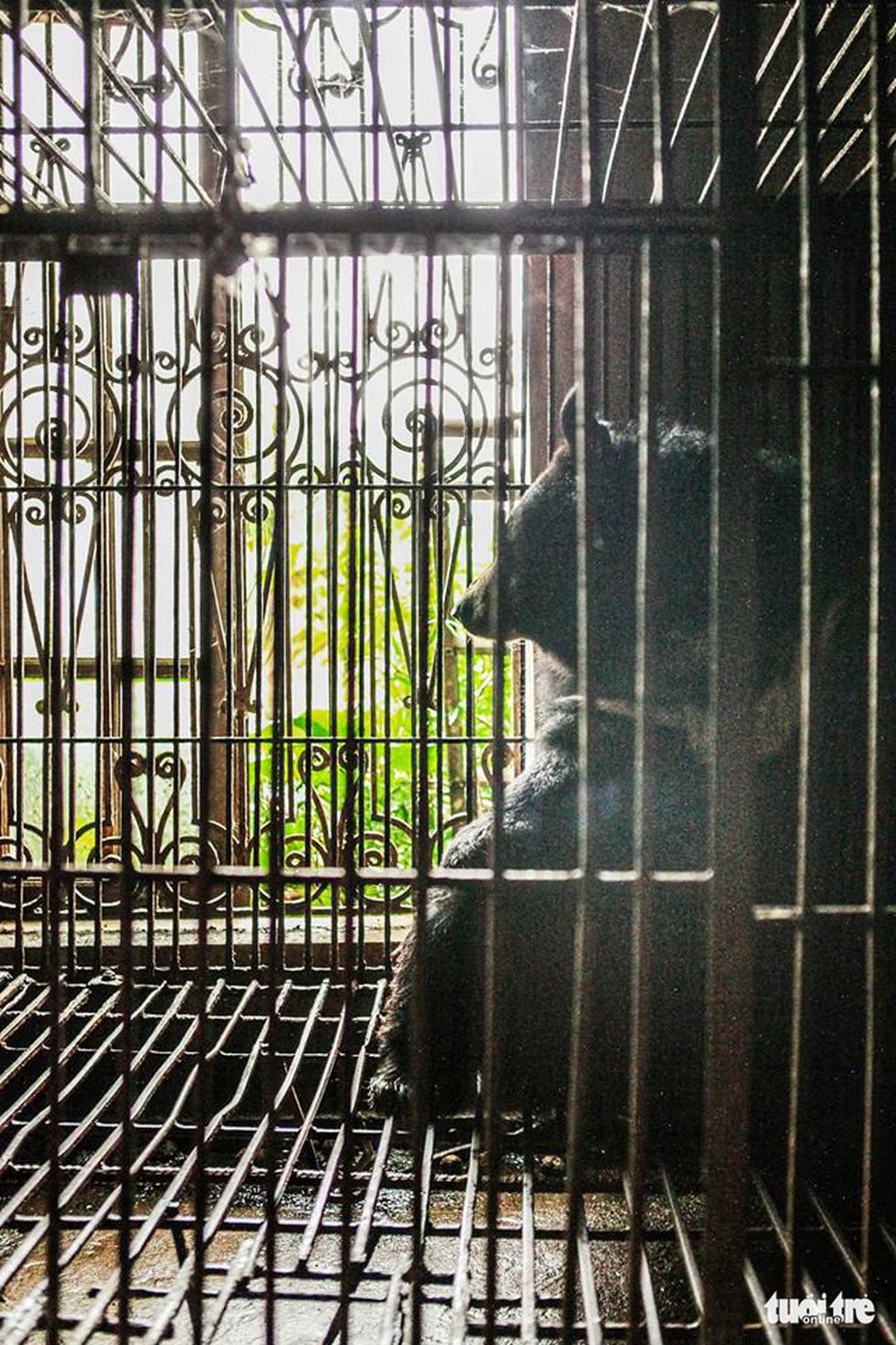 Hãy cứu những chú gấu gặm nỗi buồn trong cũi sắt - Ảnh 4.