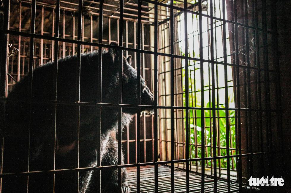 Hãy cứu những chú gấu gặm nỗi buồn trong cũi sắt - Ảnh 5.