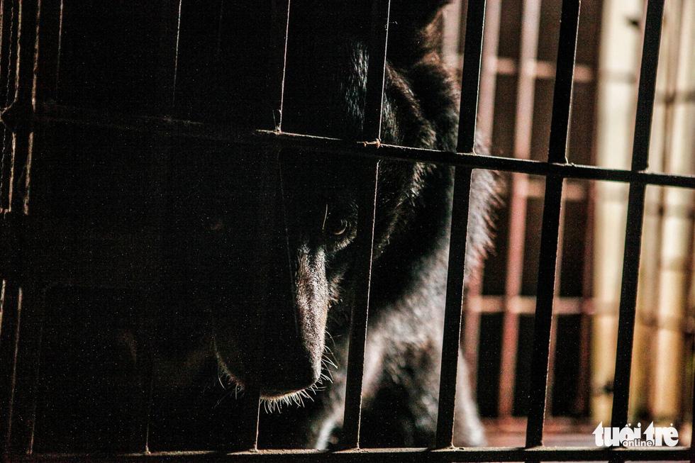 Hãy cứu những chú gấu gặm nỗi buồn trong cũi sắt - Ảnh 1.