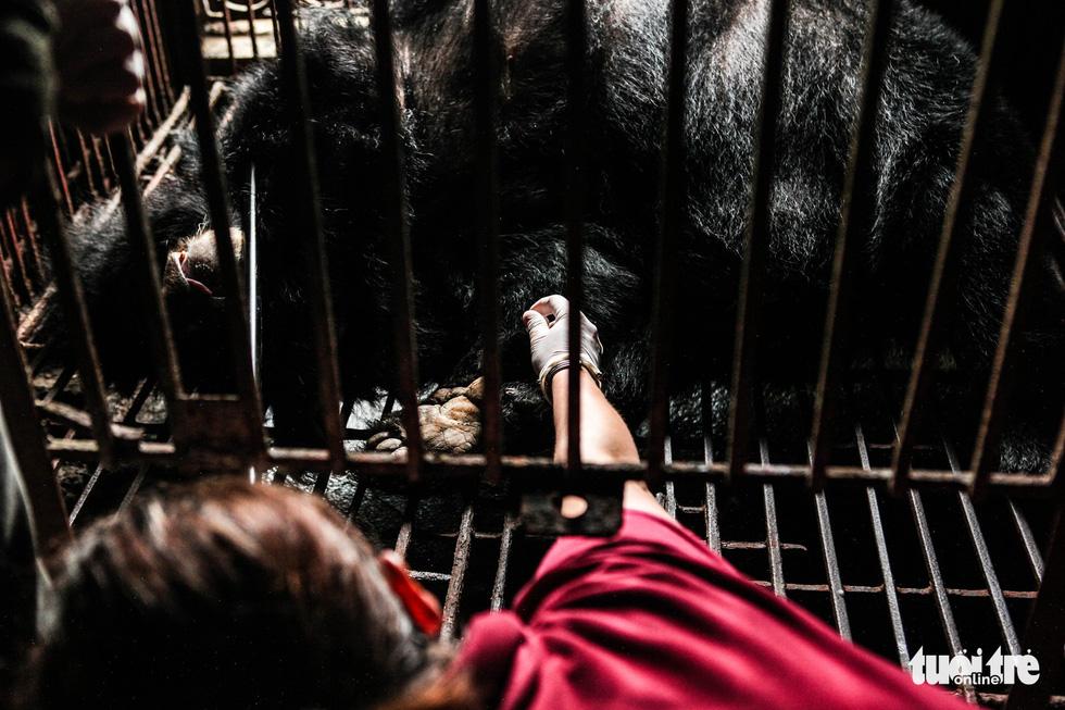 Hãy cứu những chú gấu gặm nỗi buồn trong cũi sắt - Ảnh 7.