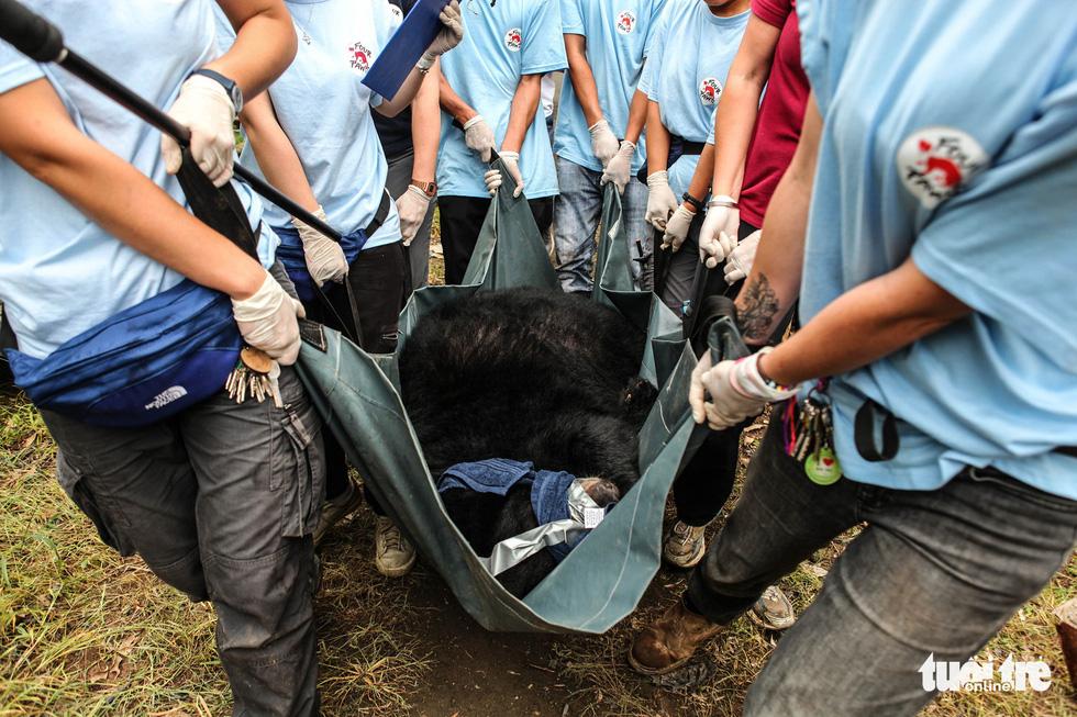 Hãy cứu những chú gấu gặm nỗi buồn trong cũi sắt - Ảnh 8.