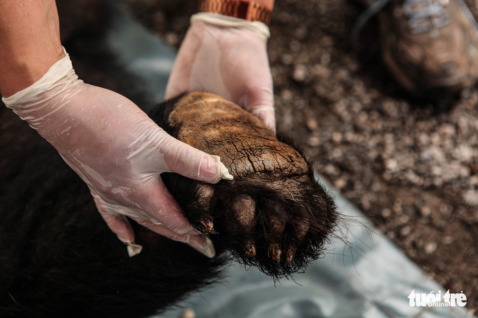 Hãy cứu những chú gấu gặm nỗi buồn trong cũi sắt - Ảnh 10.